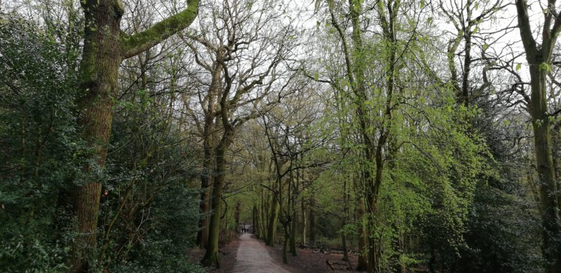 Green Spaces and Ancient Woodlands in Barnet and Haringey